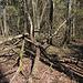 """Unterwegs am Гара Лысая / Hara Lysaya - Während des Abstiegs hinunter in Richtung Waldweg geht's wieder durch die """"Wildnis""""."""