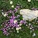malerisches Blumen-Stein-Arrangement
