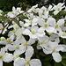 Blumenpracht am Rande des Altstädtchens ...