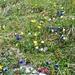 und immer wieder: farbenfrohe Blumenteppiche