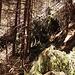 Alle paar Meter dasselbe Bild: Zerstörte Bäume, die zu Barrieren wurden