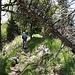 Der Weg zur Dent de Vaulion ist abwechslungsreich und verläuft zeitweise auf dem Kamm