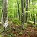 .. Stöckliberg-Plateau.<br />Der Steinmann ist ganz hinten