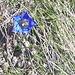 fioriture a pochi passi dalla neve
