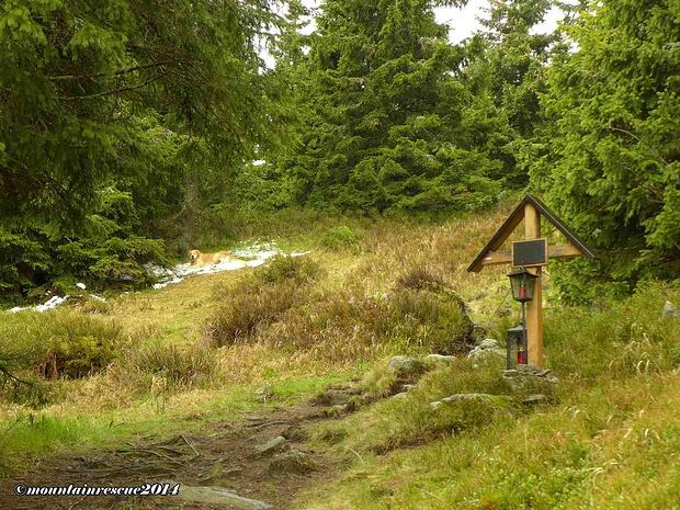 Bereits auf der Gipfelwiese kurz vor dem Schutzhaus