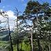 typischer Jura-Grat- und Gipfel-Bewuchs
