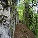 teilweise sehr steile Hänge unterhalb der Felswände 4
