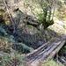 ...und über alte Holzbohlen
