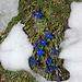 Farbtupfer zwischen dem ganzen Schnee