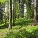 Angenehme Passage durch lichten Wald.