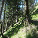 Das Steiglein im steilen Hochwald, hier gut zu sehen. Erst heute las ich, das dieser Steig schon von einer Menge Hiker in letzter Zeit erklommen wurde.