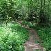 die schönen Wanderwege, viel steiler, als es auf dem Foto scheint