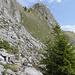 Riesenporthorn von Süden