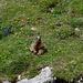Zwischen Zwinglipass und Chreialp sind die Murmeltiere omnipräsent