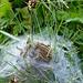 weiß zufällig jemand wieso die Raupen in dieser Art Netz sind, bzw. welche Tiere daraus entstehen?<br />Haben wir heute einige Male gesehen.