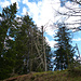 der Gipfel des Riesenkopf liegt laut GPS bei diesen abgestorbenen Bäumen