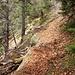 Waldsteig