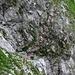 heikle kurze Kletterei in die Rinne unter der Silbergrube