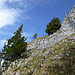 Meine Abstiegsroute von den Schaflägerzähnen nach Süden (beim der Baumgruppe über die Felsstufe, T6)