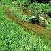 und besuche die renaturierte Bidijeri...nicht schön im Moment...nur Gras und keine Blumen!!!