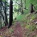 Das ist unser Weg, vorne noch recht breit, weiter hinten sieht man den schmalen Pfad