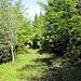 Abstieg nach Baulmes, bald geht es in den Wald
