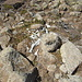 makabre Überreste auf dem Grat