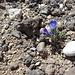 noch mal eine Blume - etwas verloren wirkend in dieser Steinwüste