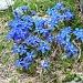 Völlig false die Farben auf dem Foto da die Äncien eine viel tieferen Blau hatten.