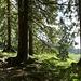 Durch lichten Hochwald geht es bergwärts