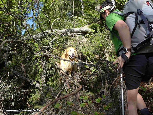 Teilweise mühsam der Anstieg durch umgestürzte Bäume