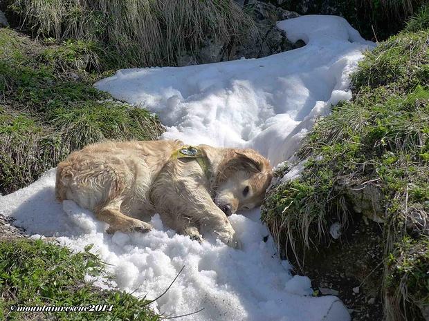 Es gibt für Luca nichts Schöneres als Schneeflecke...