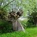 Und noch ein kurioser Baum...