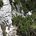 Blick nach unten, entlang der Felswand, zum Einstieg.