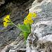 la natura che nasce dalla roccia...