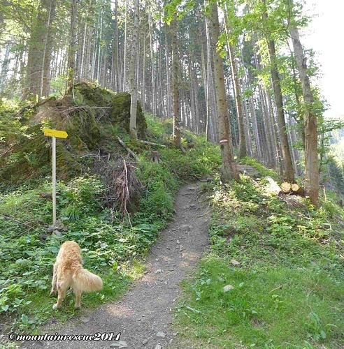 Immer wieder sind Forstwege zu queren