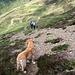 Jack,Piera ed Alberto dopo l'alpe di Pietrarossa