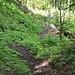 Schlussabstieg durch den Wald.