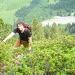 plötzlich inmitten von Alpenrosen