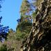 Symphonie der Bäume an den oberen Aufschwüngen der Roten Südwand