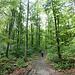 im Wald wird es dann ein Wanderweg