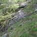 resti del muraglione di quota 1100 nel vallone del Caürgh