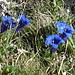 die 2-te etwas schrofige SL ist wieder mit mit vielen Blumen geschmückt