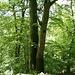 Mein Rastplatz unter kraftspendenden Bäumen.