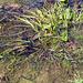 Auf dieser Foto sind mindestens 10 Frösche zu sehen, finde sie!