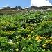 Spring at Kallabaku