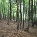 Wandering in the wood above Alpe di Corgella...