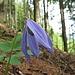und im Wald die Rebe