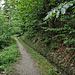 Ohne direkte Sonnenbestrahlung wirkt das Grün des Waldes heute besonders intensiv