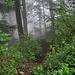 Aufstieg im Wald. Die Steilheit sieht man hier nicht.